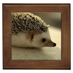 Standard Hedgehog II Framed Tile from ArtsNow.com Front
