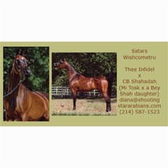 Sstars Wishcometru Arabian Mare For Sale By Diana   4  X 8  Photo Cards   9tqrx7nvy8e7   Www Artscow Com 8 x4 Photo Card - 3
