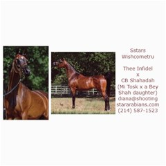 Sstars Wishcometru Arabian Mare For Sale By Diana   4  X 8  Photo Cards   9tqrx7nvy8e7   Www Artscow Com 8 x4 Photo Card - 10