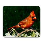 Cardinal On A Limb - Large Mousepad