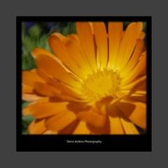 Flowercanvas1 By Dena Jenkins   Mini Canvas 8  X 8  (stretched)   7gpzjtpg738q   Www Artscow Com 8  x 8  x 0.875  Stretched Canvas