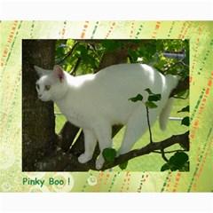 Kitty Pics #1 B By R K  Felton   Collage 8  X 10    Kxlqj2uxbza0   Www Artscow Com 10 x8 Print - 10