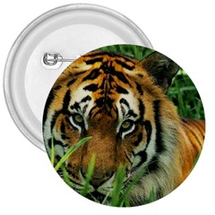 Tiger 3  Button by ironman2222
