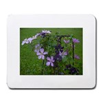 Clamatis flower - Large Mousepad