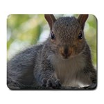 Baby Squirrel - Large Mousepad