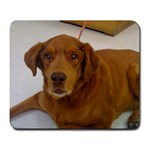 This is the dog I lost May 15th, 2010. Her name is Harmony. - Large Mousepad