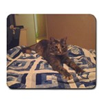 Coco, our new cat. - Large Mousepad