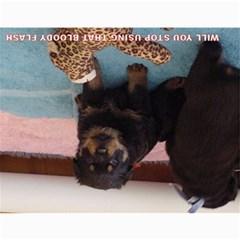 Rotti Puppy Dog Calander By Sharon Hoey Mansfield   Wall Calendar 11  X 8 5  (12 Months)   5ah5wmshbnff   Www Artscow Com Last Logo Page