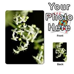 Flower Essences By Cyndie Siegel   Multi Purpose Cards (rectangle)   Gj8zzlzwodss   Www Artscow Com Front 2