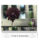 2011 Flora of Westboro - Wall Calendar 11  x 8.5  (12-Months)
