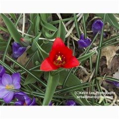 2011 Flora Of Westboro By Kevin Newcomb   Wall Calendar 11  X 8 5  (12 Months)   Fijjq3hdvs0t   Www Artscow Com Month