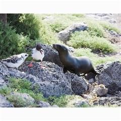 Galapagos 2011 Calendar By Matt Haber   Wall Calendar 11  X 8 5  (12 Months)   5q8ni92scouo   Www Artscow Com Month