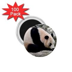 Giant Panda 1 75  Magnet (100 Pack)