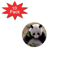 Big Panda 1  Mini Magnet (10 Pack)  by dropshipcnnet