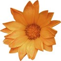 armina_naturals_flower1