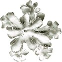 DZ_WinterSparkle_flowerCluster