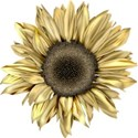 moo_blooming_sunflower