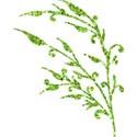 MLIVA_may-leaf2