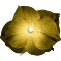 moo_cherished_flower1