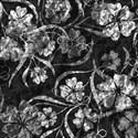 Flower Background 4