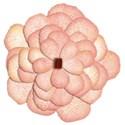 jeanine-blossom10-ajs