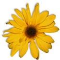 FLOWER2_secretgarden_mikki_livanos