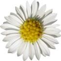 snackpackgu_fairies_flower3