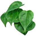 RAKAug09_snackpackgu_leaf3