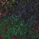 multi damask floral emb