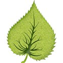 leaf2c
