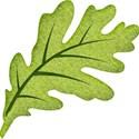 leaf5d