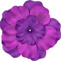 jThompson_purple_flower4
