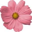 FLOWERpink_mikki_livanos