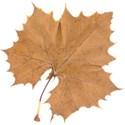 l_b_leaf 1