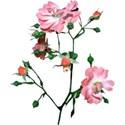 armina_seaside_garden_flowerbranch