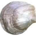 armina_seaside_garden_shell6