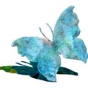 csb_hawaiiannights_blue-butterfly