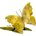 csb_hawaiiannights_yellow-butterfly