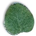 leaf2-gg-mikki