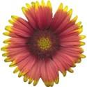 Flower Mania Set - 22