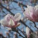 Floral9