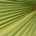 green fronds emb