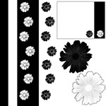 Black and White with Flowers