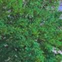 bckg8