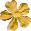 DZ_flower1