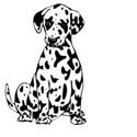 d-dog1