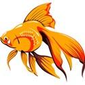 f-fish1
