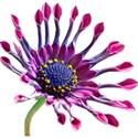 FlowerSooze