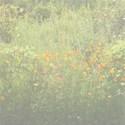Faded wildwild flowers