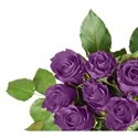 Purple corner rose